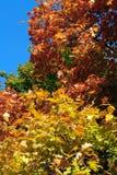 Colorfull autumn trees Royalty Free Stock Photos