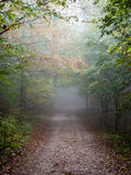 Colorfull autumn trees in heavy mist in forest Stock Image