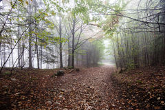 Colorfull autumn trees in heavy mist in forest Royalty Free Stock Images
