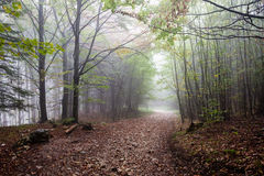 Colorfull autumn trees in heavy mist in forest Royalty Free Stock Photography