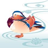 Colorfull bird on abstract swirls background. Bird mandarin duck on the abstract floral background with stylized water waves and lotuses ornaments Stock Photos