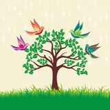 Colorfull bird on the tree and grass green Royalty Free Stock Image