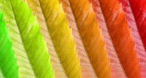 Colorfull Blätter stockfotos