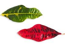 Colorfull blad på isolerad vit Arkivfoto