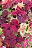 Colorfull blommar backround royaltyfria foton