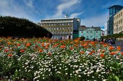 Colorfull blommar i Reykjavik Arkivfoton