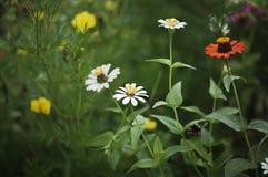 Colorfull blommor Arkivfoton