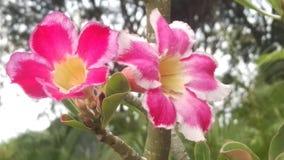 Colorfull-Blumen stockfoto