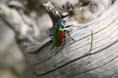 Colorfull bug or insect Royalty Free Stock Photo
