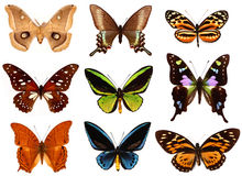 Colorfull butterflies Royalty Free Stock Images