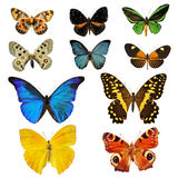 Colorfull butterfly stock images