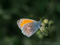 Colorfull butterfly on top of a plant Stock Photo