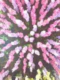 Colorfull dekorativa växter royaltyfria bilder