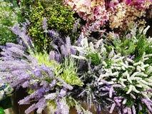 Colorfull dekorativa växter fotografering för bildbyråer