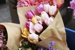 Colorfull del tulipán Imágenes de archivo libres de regalías