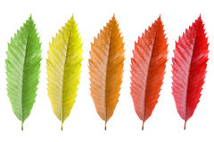 Colorfull doorbladert Royalty-vrije Stock Foto