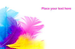 Colorfull feathers with copy-space Royalty Free Stock Photo