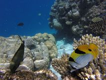 Colorfull fisch underwater. Colorfull fisch under water with reefs stock photo