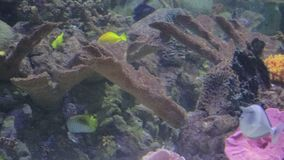 Colorfull fish swimming around. A brightly colored coral reef stock video footage