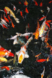 Colorfull fish in the water Stock Images