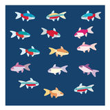 Tetra colorful Fish. Tetra fish with multi colors in one fish Stock Photos