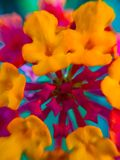 A colorfull flower. The beautyfull macro flower on the ground Royalty Free Stock Images