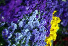 Colorfull flowers stock photography