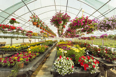 Colorfull Flowers in a greenhouse Royalty Free Stock Photo