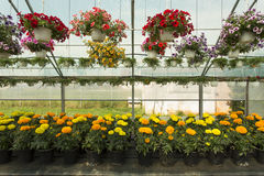 Colorfull Flowers in a greenhouse Stock Photography