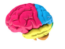 Colorfull human brain. On white Royalty Free Stock Photo