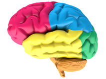Colorfull human brain Royalty Free Stock Photos