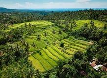 Colorfull i unikalny ricefield! zdjęcie royalty free