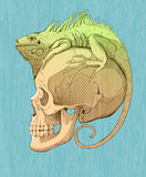 Colorfull  iguana and scull Royalty Free Stock Photography