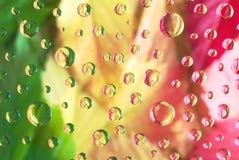 Colorfull jesieni liście Zdjęcie Stock