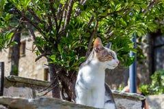 Colorfull katt som tar en ta sig en tupplur på väggen Royaltyfria Foton