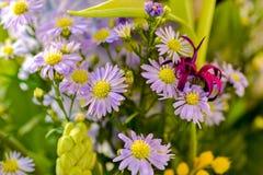 Colorfull lösa blommor Royaltyfri Bild