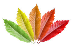 Colorfull leafs Royalty Free Stock Photos