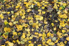 Colorfull leafs on the ground Royalty Free Stock Photography