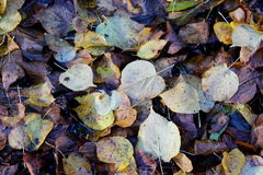 Colorfull leafs on the ground Stock Photos