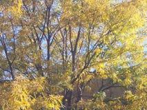 Colorfull liście Obraz Stock