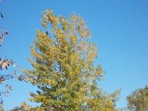 Colorfull liście Obrazy Stock