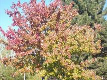 Colorfull liście Zdjęcie Royalty Free