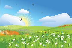 Colorfull meadow / flower and grass / vector