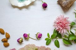 Colorfull nature background. Midtone pink flower with green leav. Es and white shell Royalty Free Stock Images
