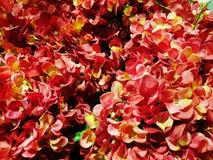 Colorfull Ornamentacyjne rośliny zdjęcia stock