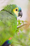 Colorfull Parrot Stock Images