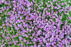 Colorfull plants Stock Images