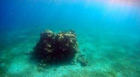 Colorfull rafa koralowa w Czerwonym morzu Zdjęcia Royalty Free