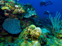 Colorfull reef and group of divers, Cuba Royalty Free Stock Photos