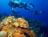 Colorfull rev och grupp av dykare, Cayo Largo, Kuba Arkivfoto